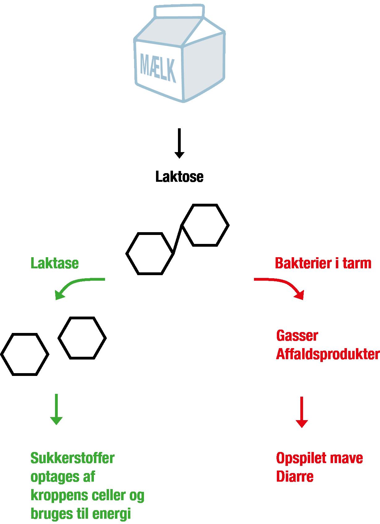 enzym i kroppen