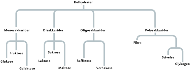 kulhydraters funktion i kroppen
