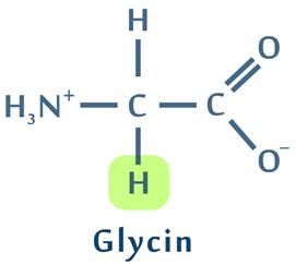 Glycin er en almindelig aminosyrer for ekstremofile bakterier da den laver en mere fast proteinstruktur.