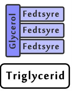 triglycerider i blodet