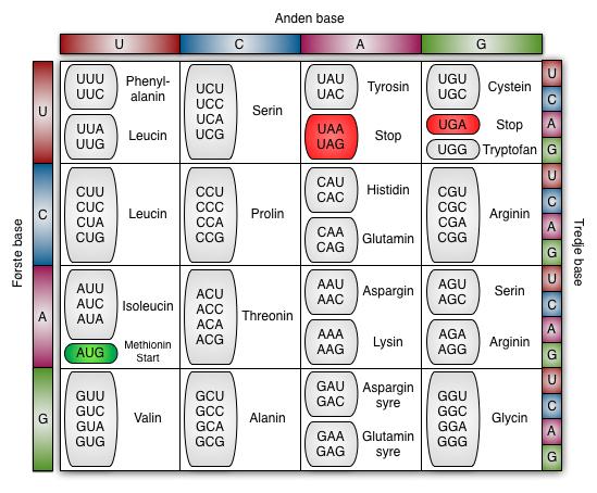 aminosyre dating metode