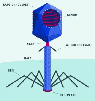 virus_udseende