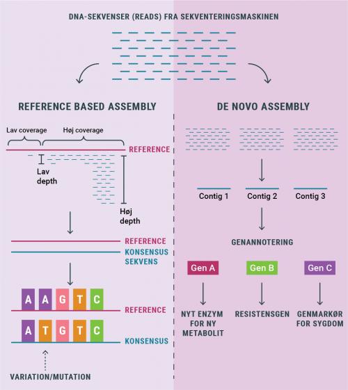 regnskov_assembly_metoder