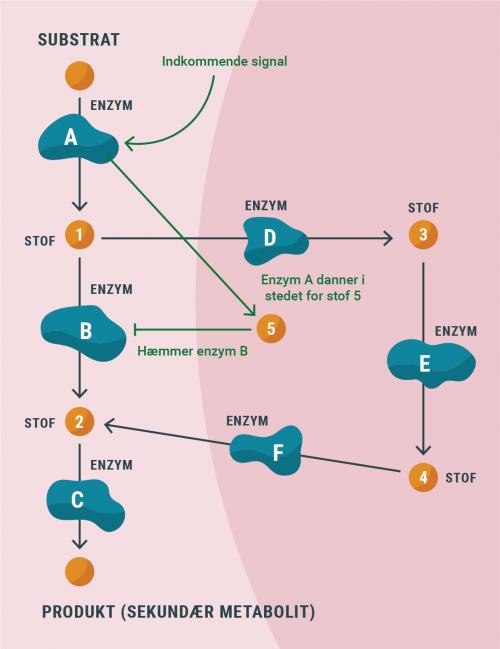 regnskov_metabolisme_regulering