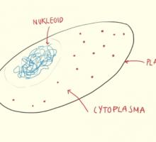 mikrobiologi_thumbnail