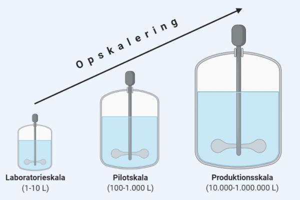 Fermentering i forskellig skala: laboratorie, pilot og produktionsskala.