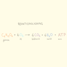 biostriben_respiration